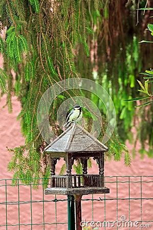 在她的木房子上把放的山雀