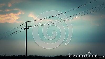 在导线的鸟