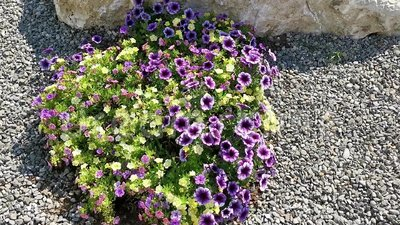 在微风的五颜六色的花