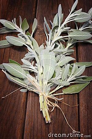 在木桌上的新鲜的贤哲植物