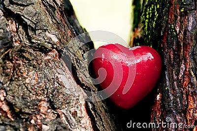 在树干的红色心脏。浪漫爱