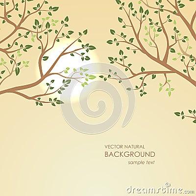 自然本底在背景树枝的日落.山西建筑设计研究院弓力强图片