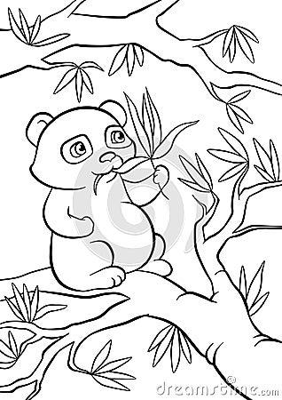 在树的小熊猫位子和吃叶子.图片