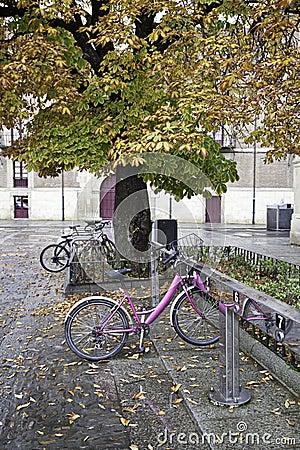 在校园的自行车