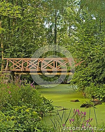在沼泽的桥梁