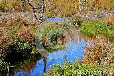 在沼泽的秋天