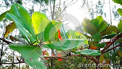 在热带气候的绿色叶子