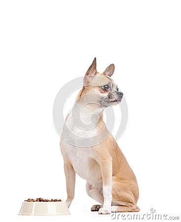 在碗附近的淡黄的小狗