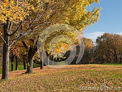在秋天结构树的高尔夫球在航路