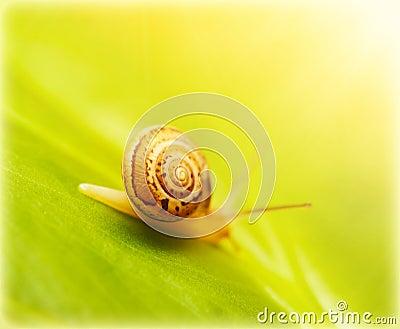 在绿色叶子的蜗牛