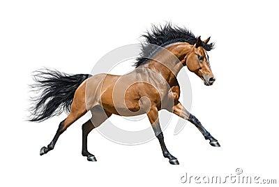 在行动的栗子公马