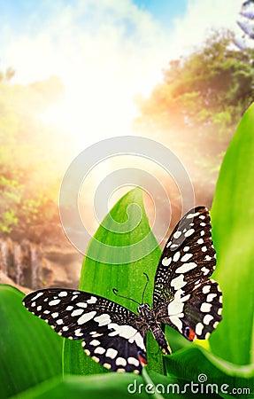 在通配的瀑布的蝴蝶森林