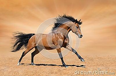 在金背景的疾驰的海湾公马