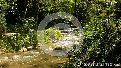 在雨季流动Paniki河的秀丽 影视素材