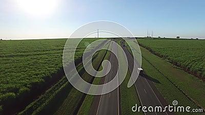 在高速公路亚历山大Balbo的空中甘蔗领域在里贝朗普雷图,巴西 股票录像