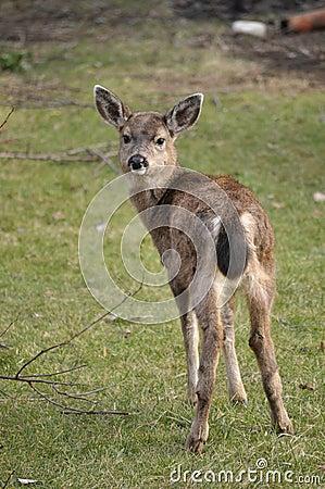 在鹿附近我凝视启用