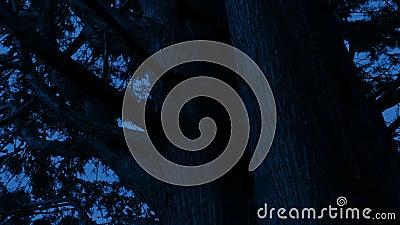 在黑暗中绕着一棵老树 股票视频
