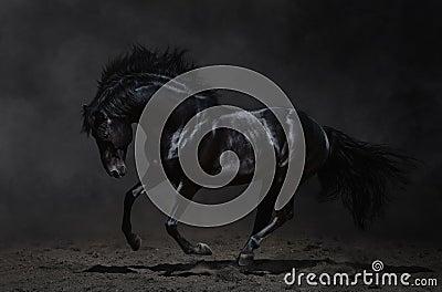 在黑暗的背景的疾驰的黑色马