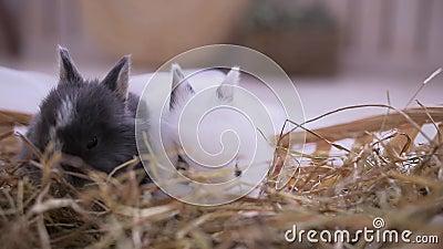 坐入篮子的小兔子 复活节庆祝 影视素材