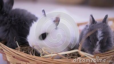 坐入篮子的小兔子 复活节庆祝 股票录像