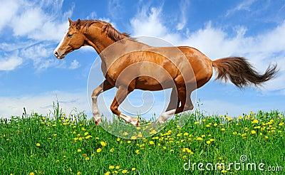 域疾驰公马