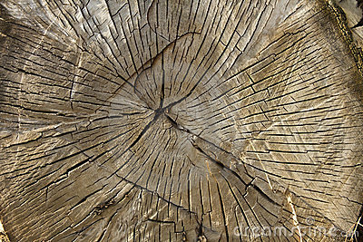 大交叉点结构树