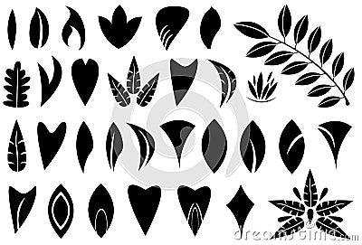 叶子形状图片