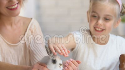 女儿和母亲头饰带的有抚摸一点白色兔子的兔宝宝耳朵的 股票录像