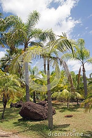 棕榈树丛在夏天 库存图片 图片 29768321