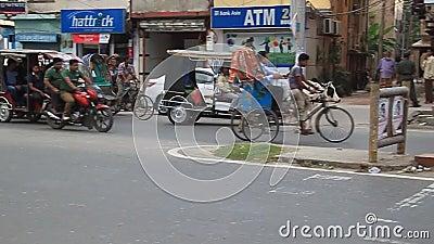 孟加拉国拉杰沙希市一条路上的牛 影视素材