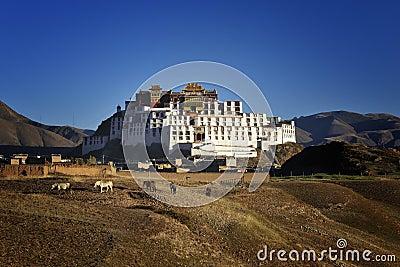 学院佛教西藏