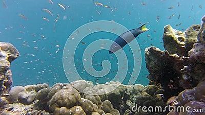 安达曼海珊瑚礁 影视素材