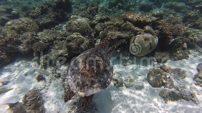 安达曼海珊瑚礁 股票录像