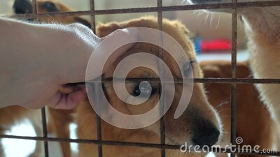 宠物收容所中男性手抚笼杂犬的特写 人、动物、志愿服务和帮助概念 影视素材