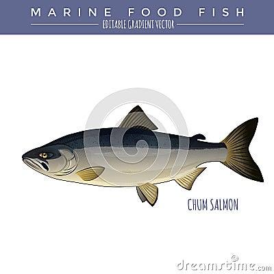 密友三文鱼例证 海洋食用鱼,编辑可能的梯度传染媒介.