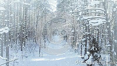 密集空中结冰的冬天的森林,森林丛林,与好的降雪和太阳4k uhd 影视素材