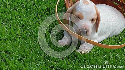 小狗画象篮子草背景hd英尺长度