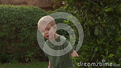 小男孩掩藏在树后的,慢动作 股票视频