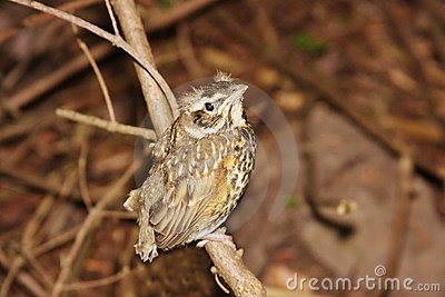 小鸟分行少许结构树