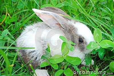 小女孩淫色囹�a_白兔子灰兔子表情包分享展示