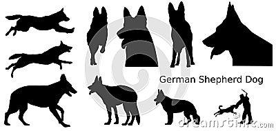 尾随德国牧羊犬
