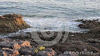 岩石海滨 股票录像