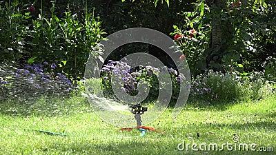 庭院喷水隆头在浇灌绿色草坪的晴天在庭院里 4K 股票录像