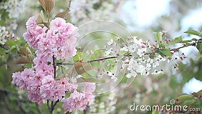 开花的树在春天