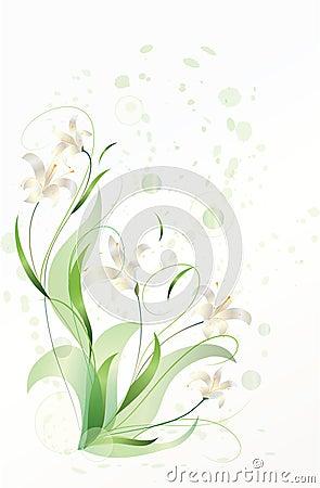 开花的百合