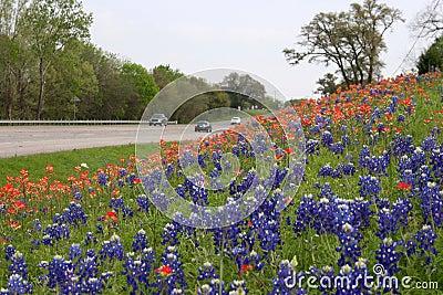 五颜六色的路风景野花.