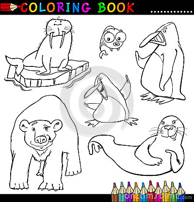 彩图或页的动物
