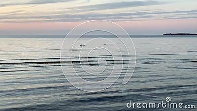 德国维斯马附近的Zirow海滩 股票录像