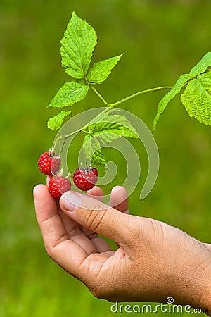 手拿野花图片-一只手拿树叶图片/手拿口红唯美图片/手图片
