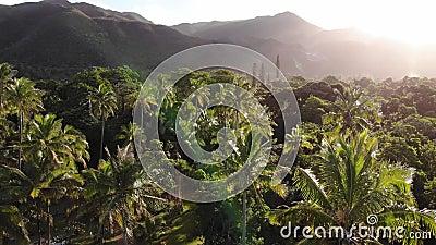 新喀里多尼亚上升通过棕榈树的Yate 影视素材